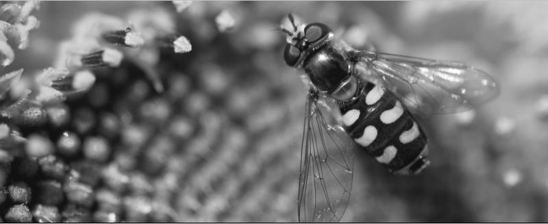 Queen Bee | Angela Talano